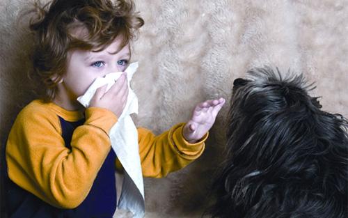 Какое домашнее животное завести аллергику?