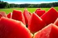 Как правильно выращивать арбуз